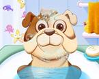 Hayvan Banyosu