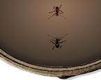 Karınca Arena