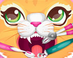 Kedi Dişçisi