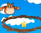 Kedi Fırlatma