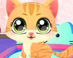 Kedi Tırnak Bakımı