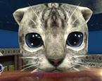 Kedi Simülatörü