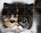Kedi Yapboz