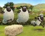 Koyun Shaun Koşu Yarışı
