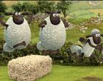 Koyunların Sorunu 4