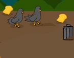 Kuş Yemleme