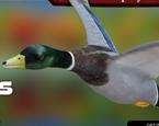 Kuş Vurma