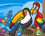 Papağan Boyama