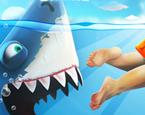 Sinirli Köpek Balığı