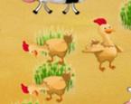 Tavuk Yumurtlama