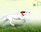 Çoban Köpeği